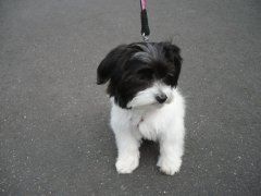 hunde-20.7.09-011.JPG
